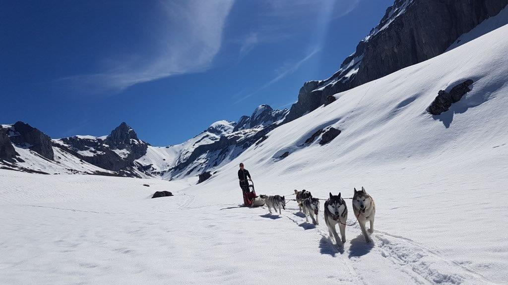 Husky-Touren im Muotatal