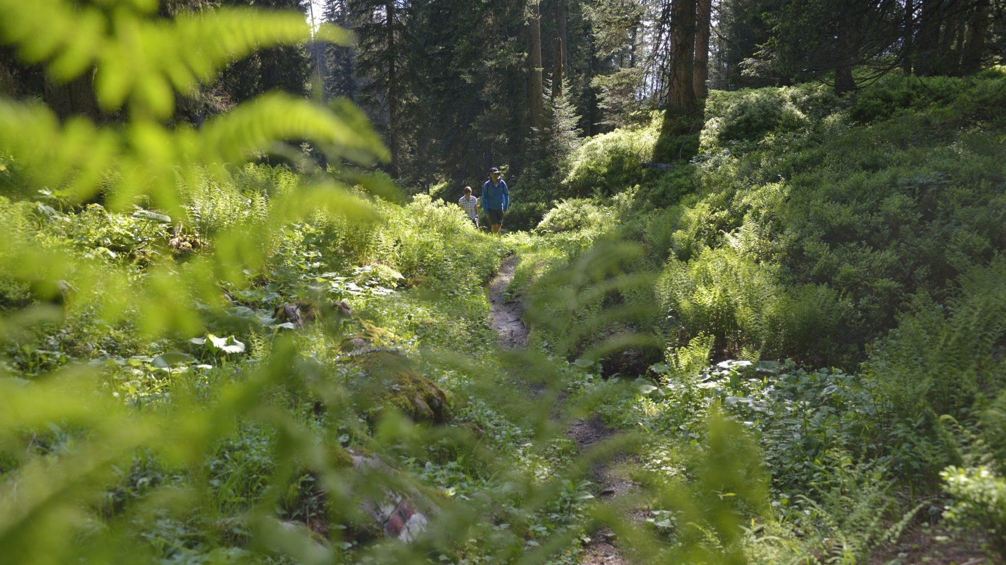 Wandern Bödmeren-Urwald