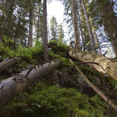 Natur pur Bödmerenwald