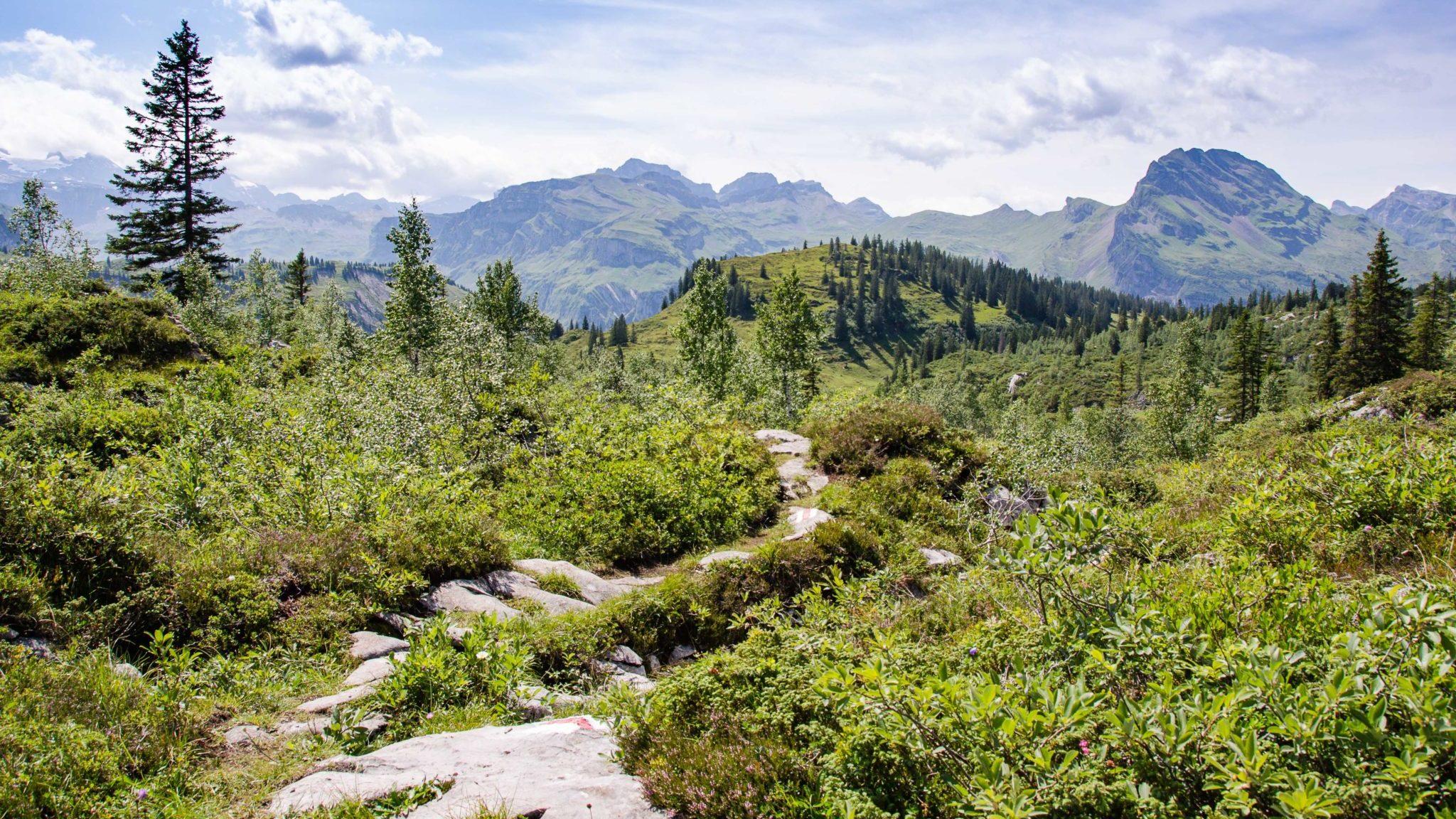 Bödmeren-Wald