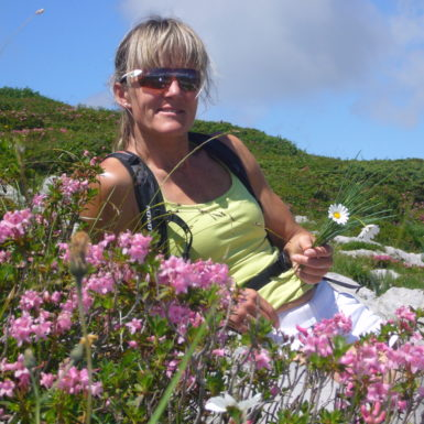 Alpenblumen im Muotatal